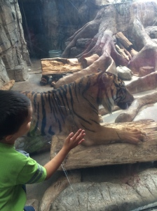The tiger is actually scratching his claws on the tree!